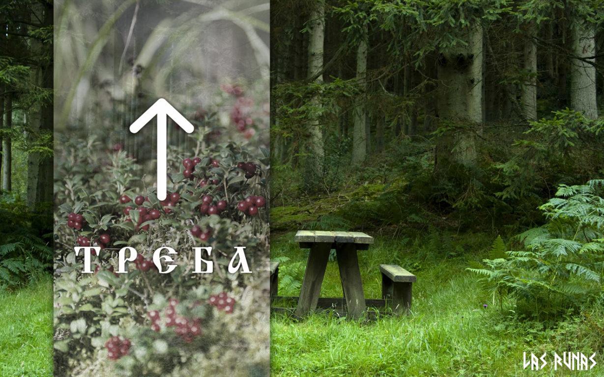 Руна Треба стоит на седьмой позиции славянского рунного ряда